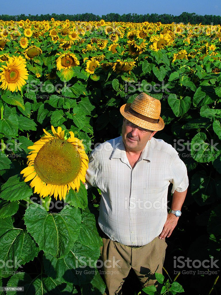 Amidst Sunflowers IV royalty-free stock photo