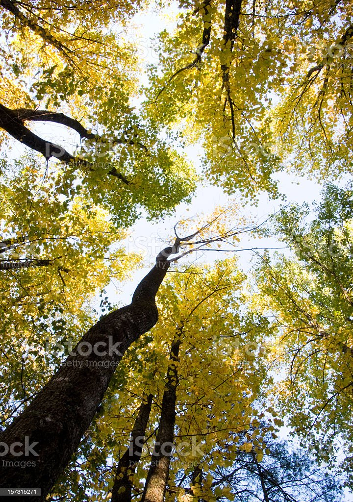 Amidst the Trees royalty-free stock photo