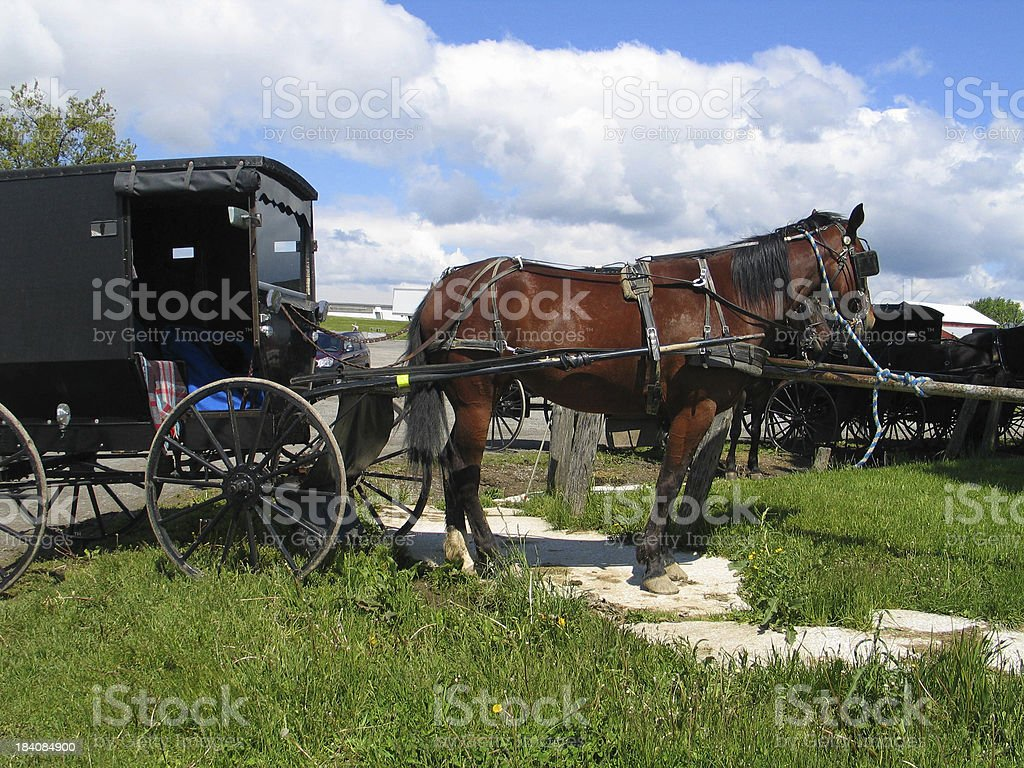 Amish Buggy and Horse Hitched stock photo
