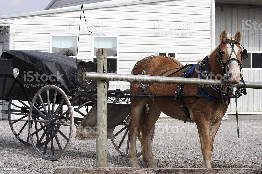 Amish Buggy stock photo