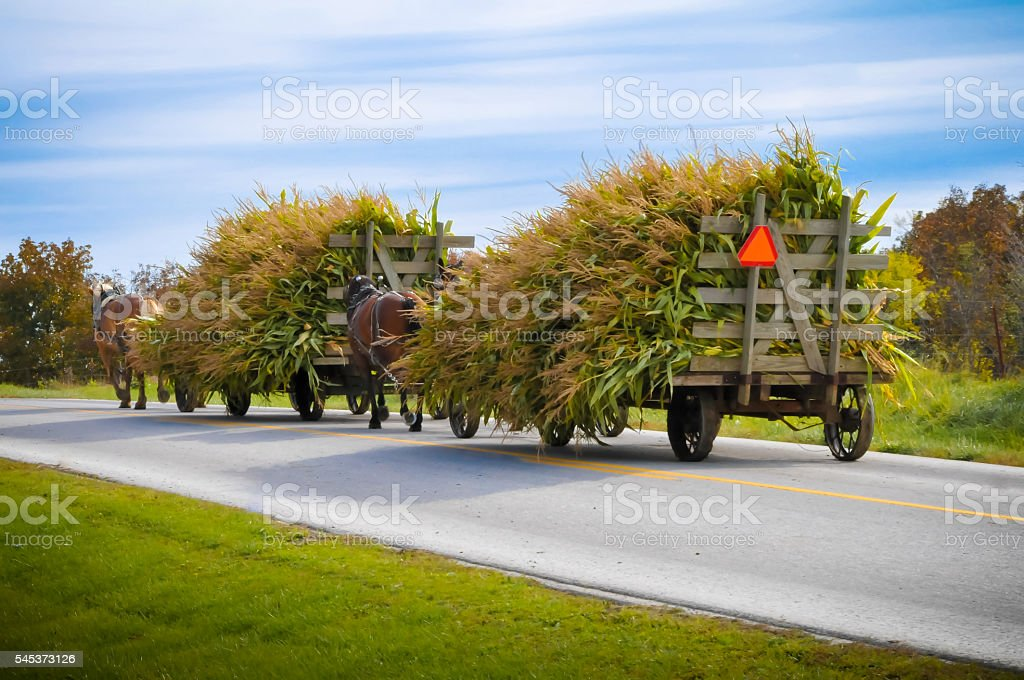Amish Carts stock photo