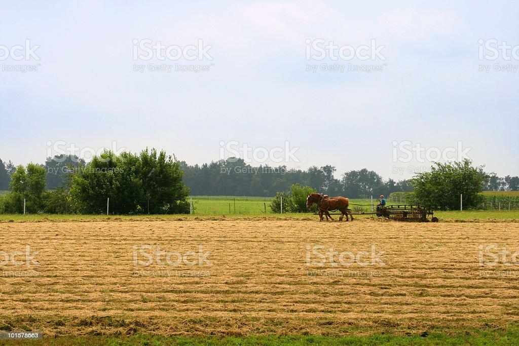 Amish Harvest royalty-free stock photo