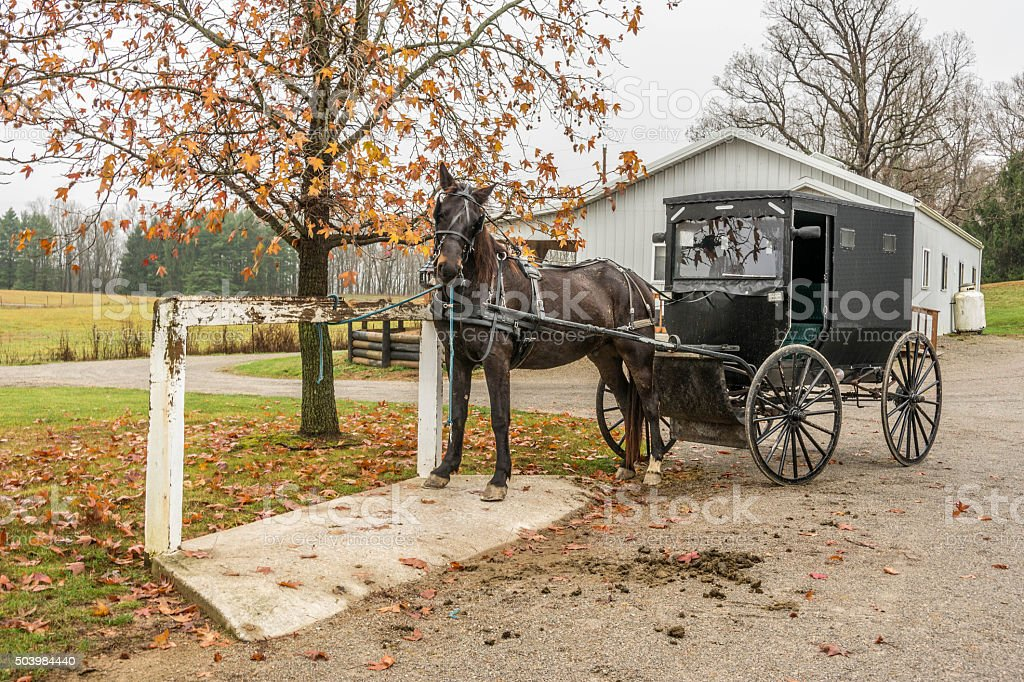 amish horse and buggy stock photo