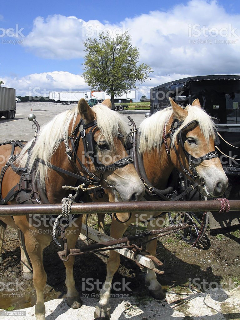 Amish Horses And Buggy Hitched stock photo