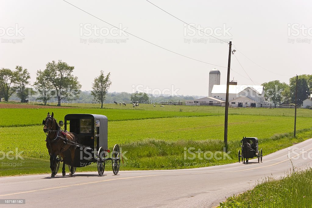 Amish in market wagons stock photo