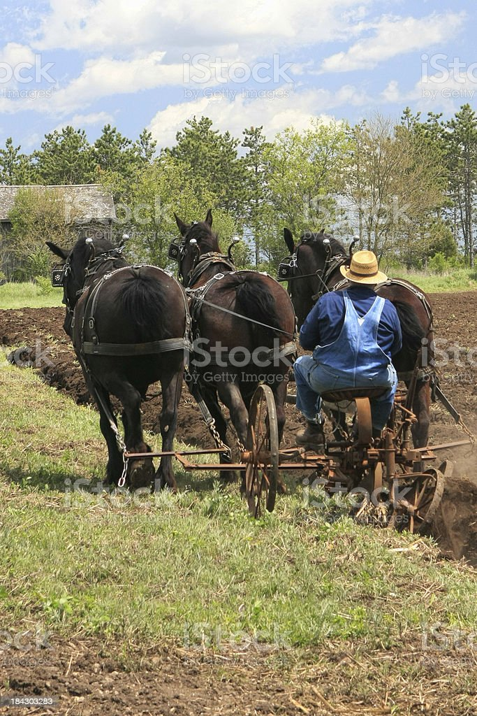 Amish Man Plowing Field stock photo