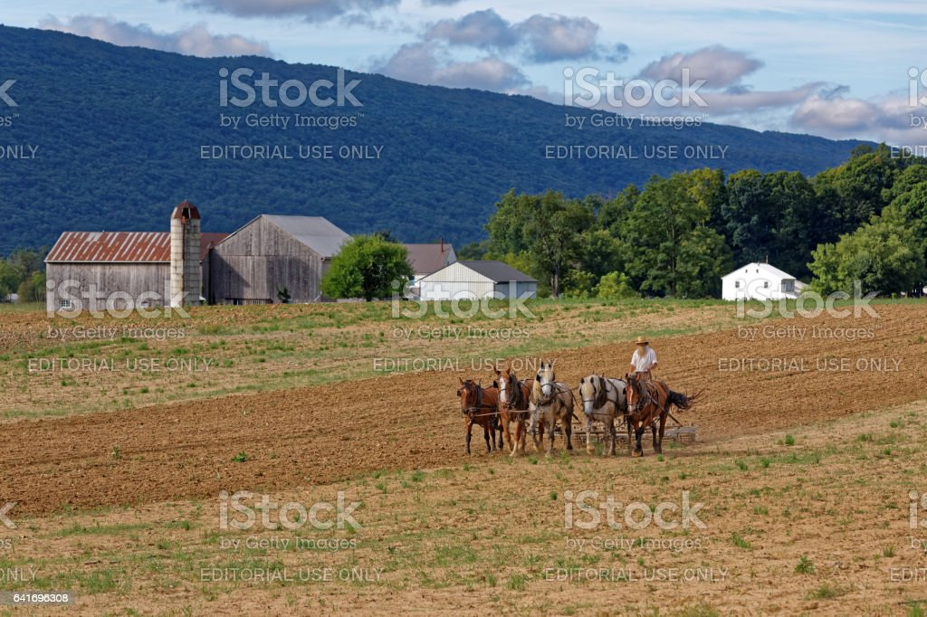 Amish Man Tilling Soil With a Team of Horses stock photo