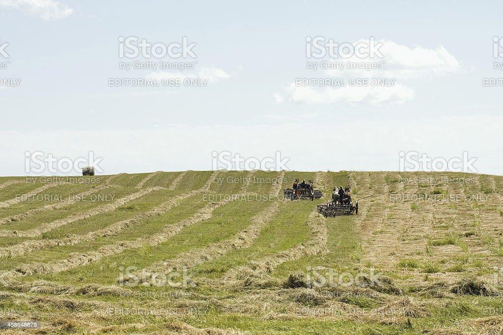 Amish Men with Horse Teams Raking Hay stock photo