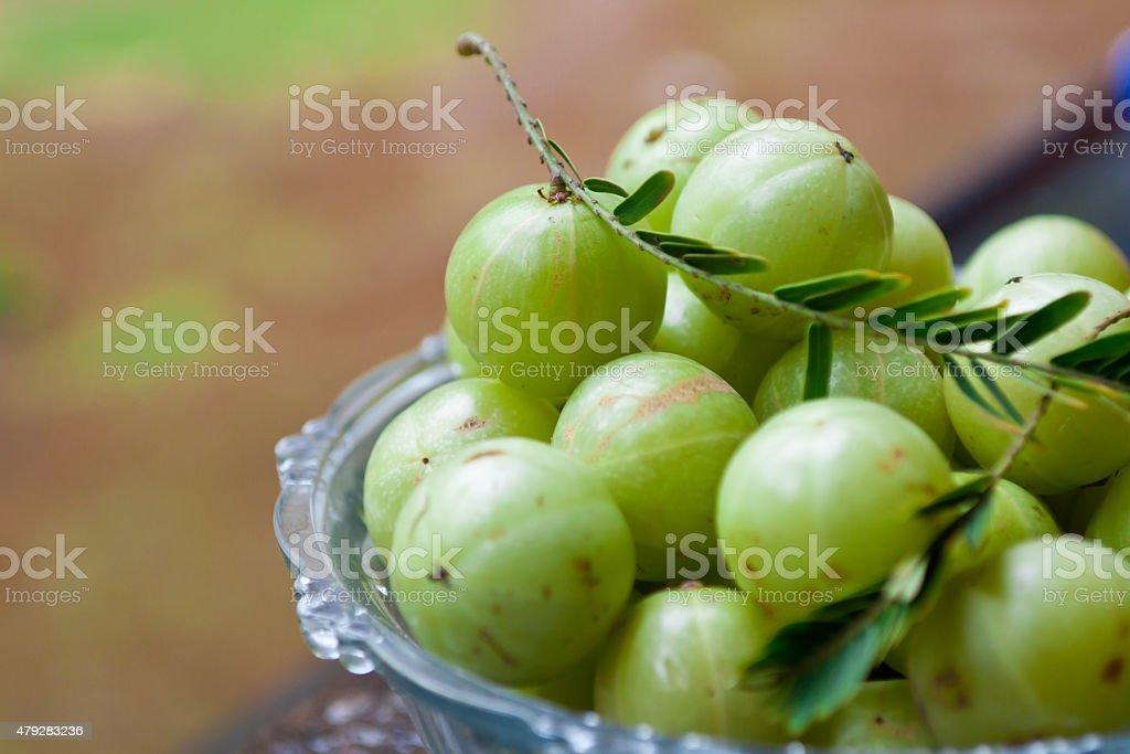 Amla Indian gooseberry many stock photo
