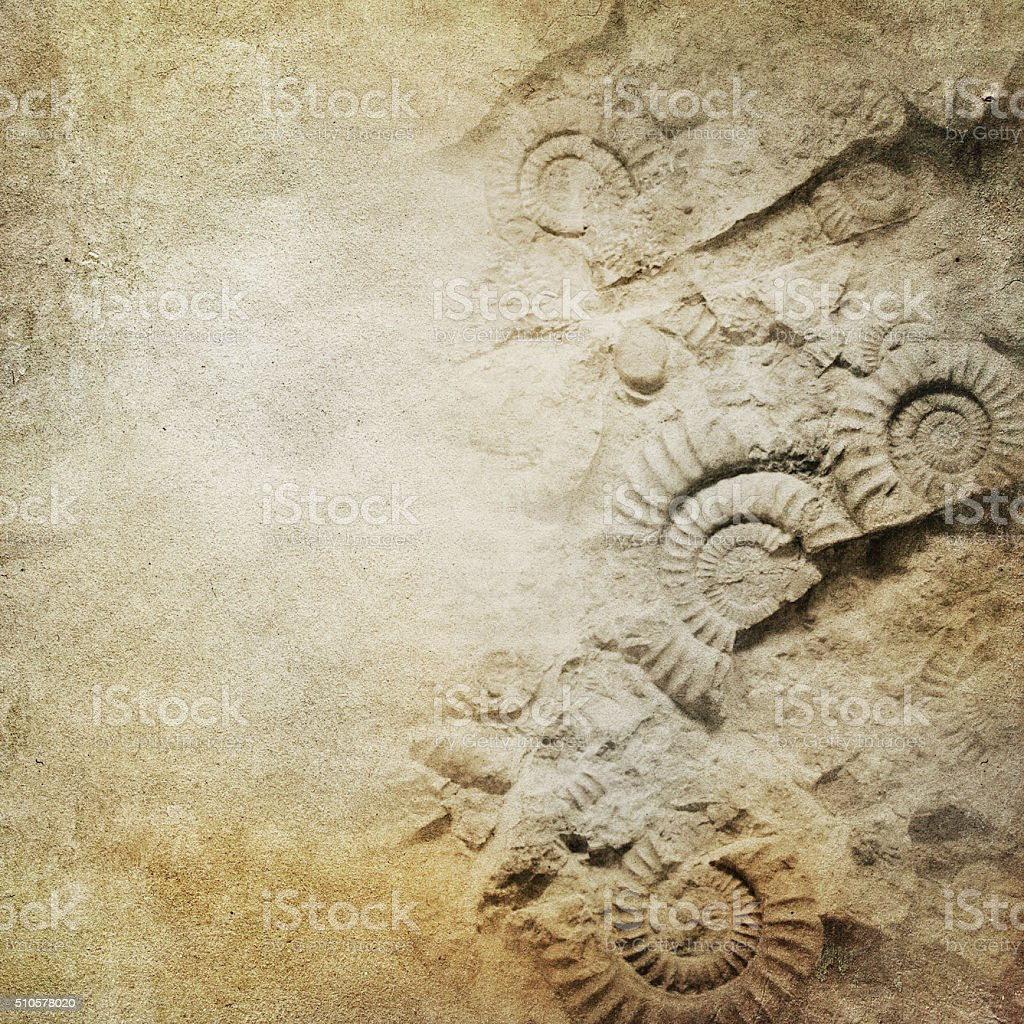 ammonite on brown paper background stock photo