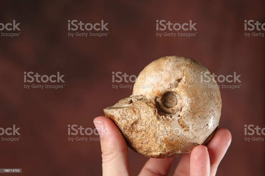 Ammonite stock photo