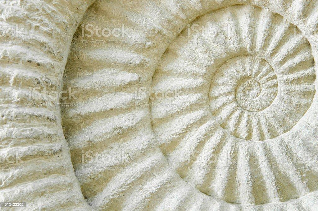 Ammonite prehistoric fossil royalty-free stock photo