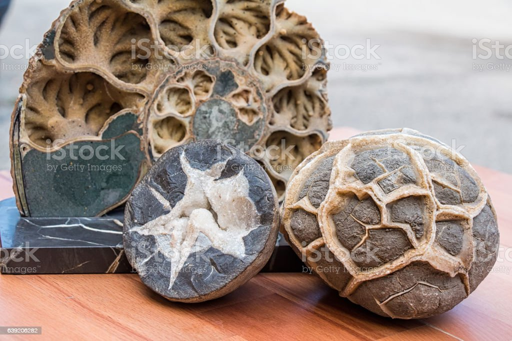 Ammonite shell viewed in section stock photo