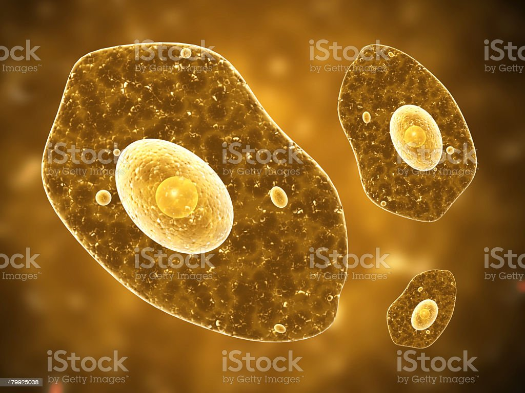 Amoeba on brown background stock photo