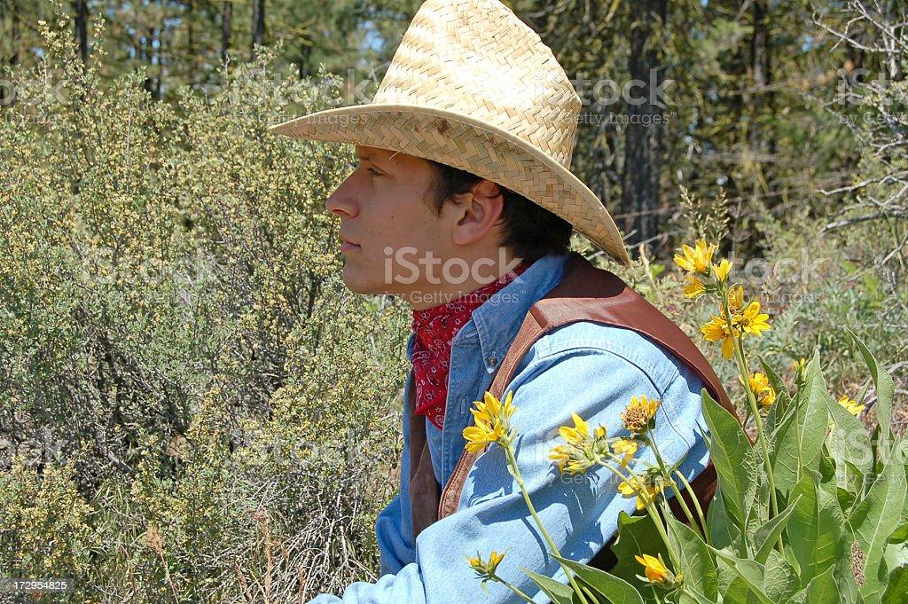 Among Desert Flora stock photo