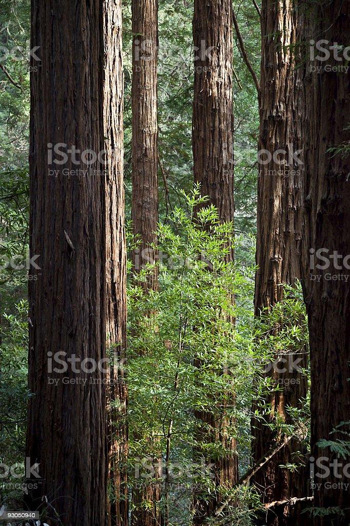 Among giants stock photo