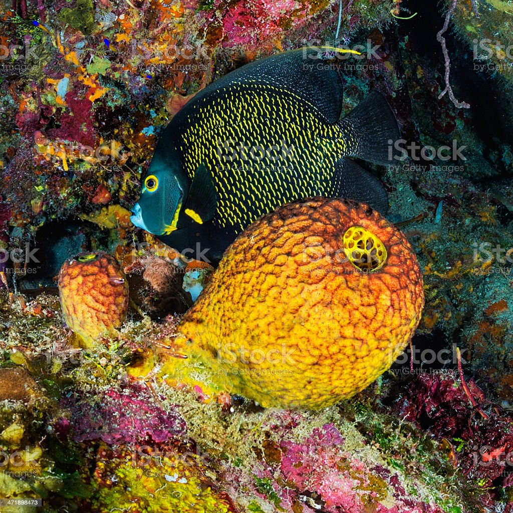 Among the corals stock photo