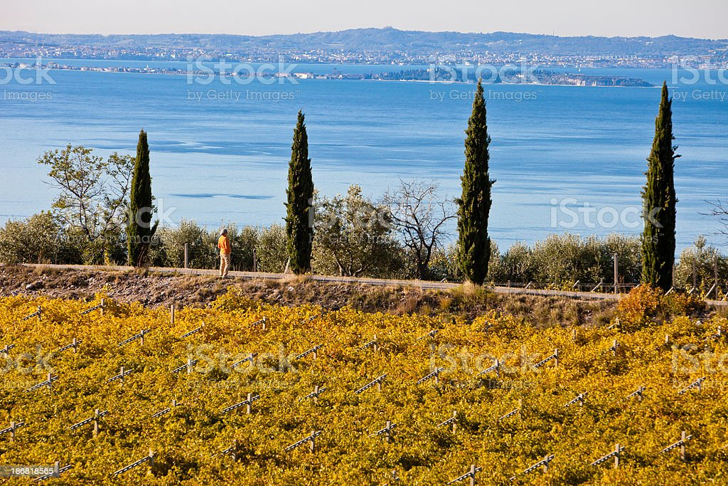 Among Vineyards and Lake Garda royalty-free stock photo