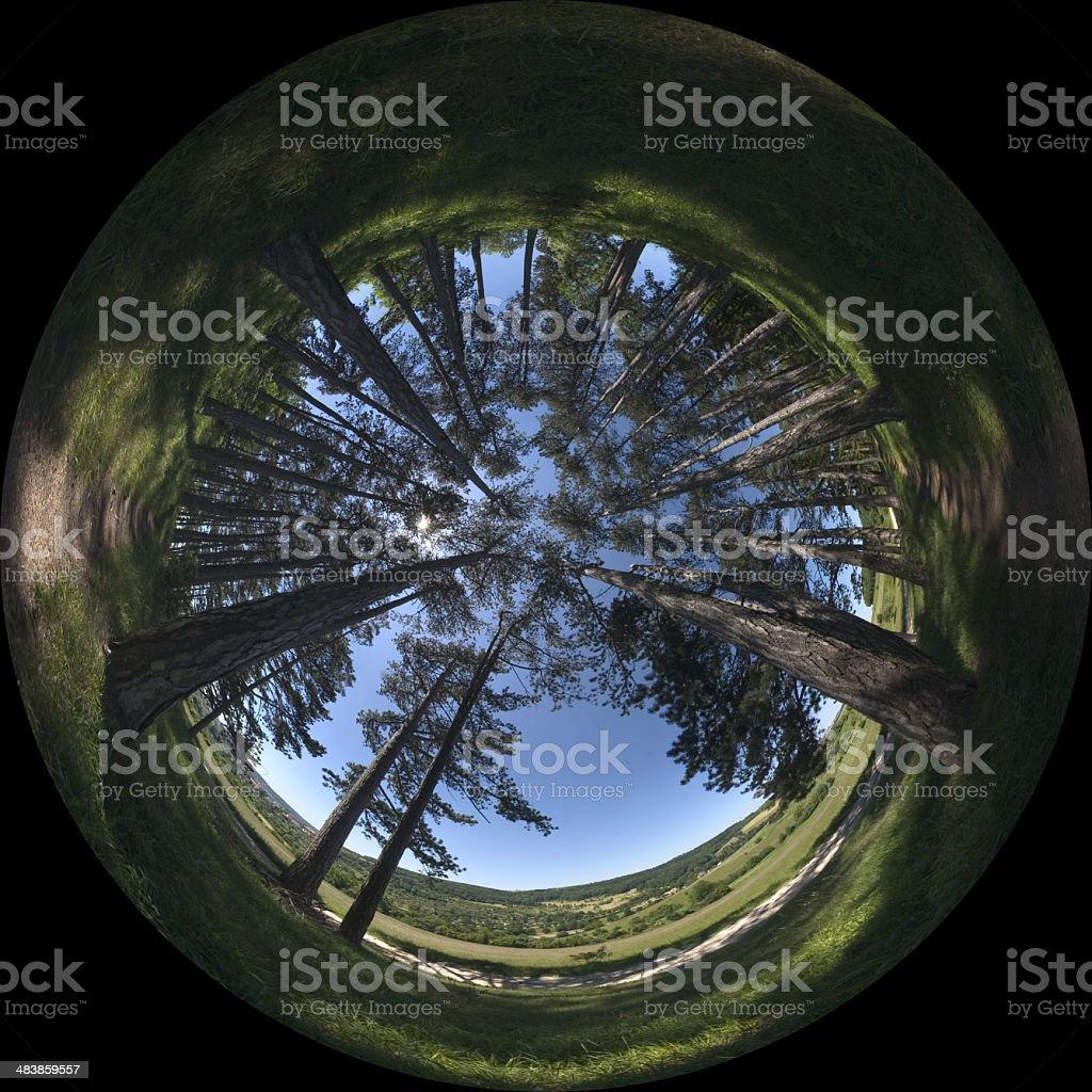 amongst trees royalty-free stock photo