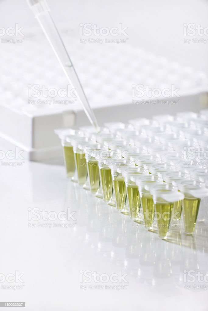 DNA amplification royalty-free stock photo