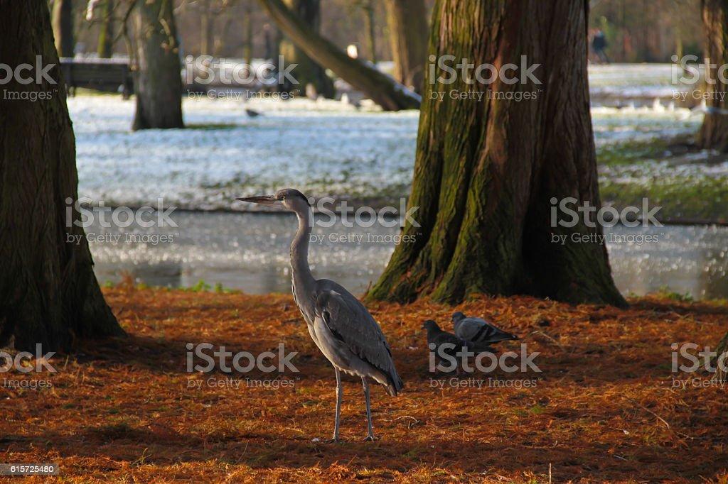 Amsterdam Bird Watch stock photo