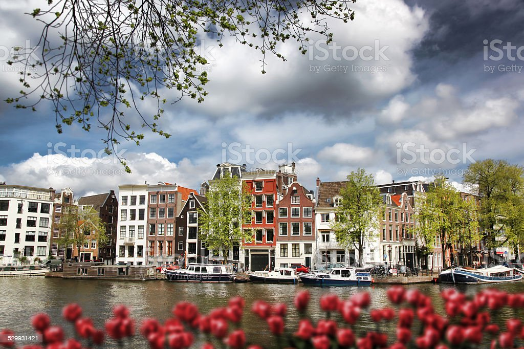 Amsterdam with boats on canal against red tulips in Holland stock photo