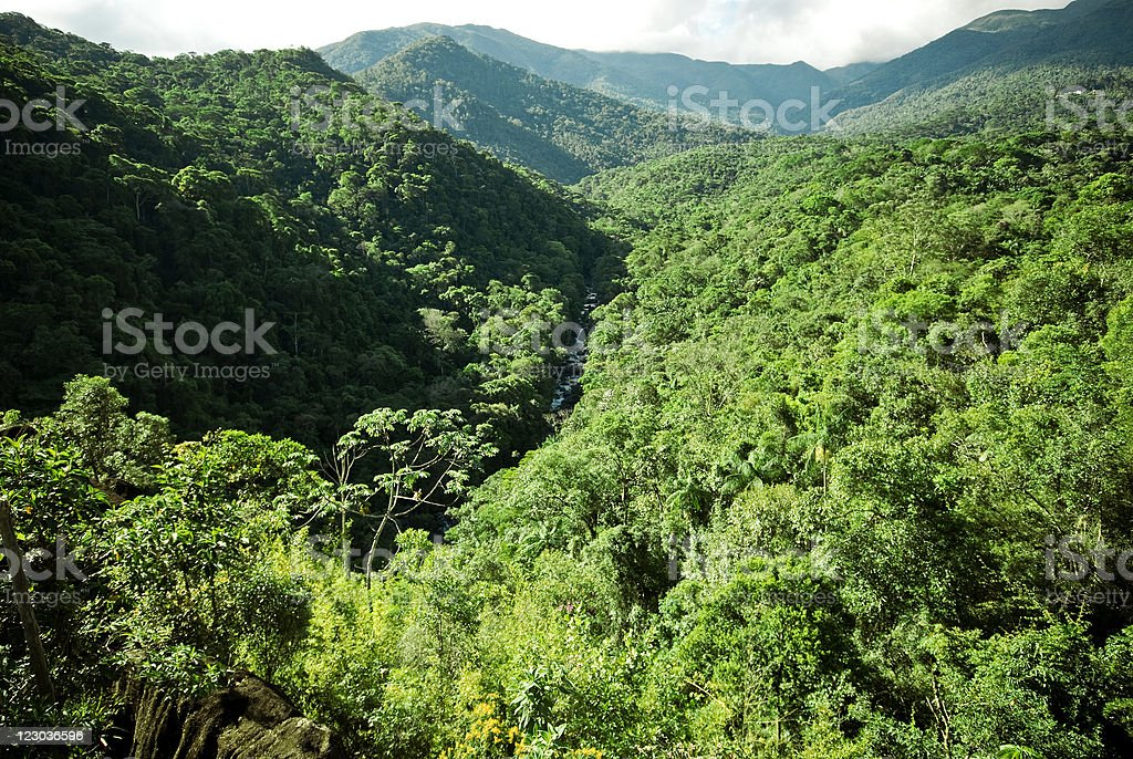 An aerial view of a jungle with green treetops royalty-free stock photo