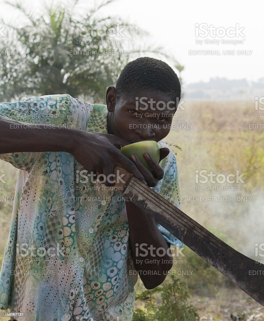 An African drinks the juice of a palm fruit stock photo