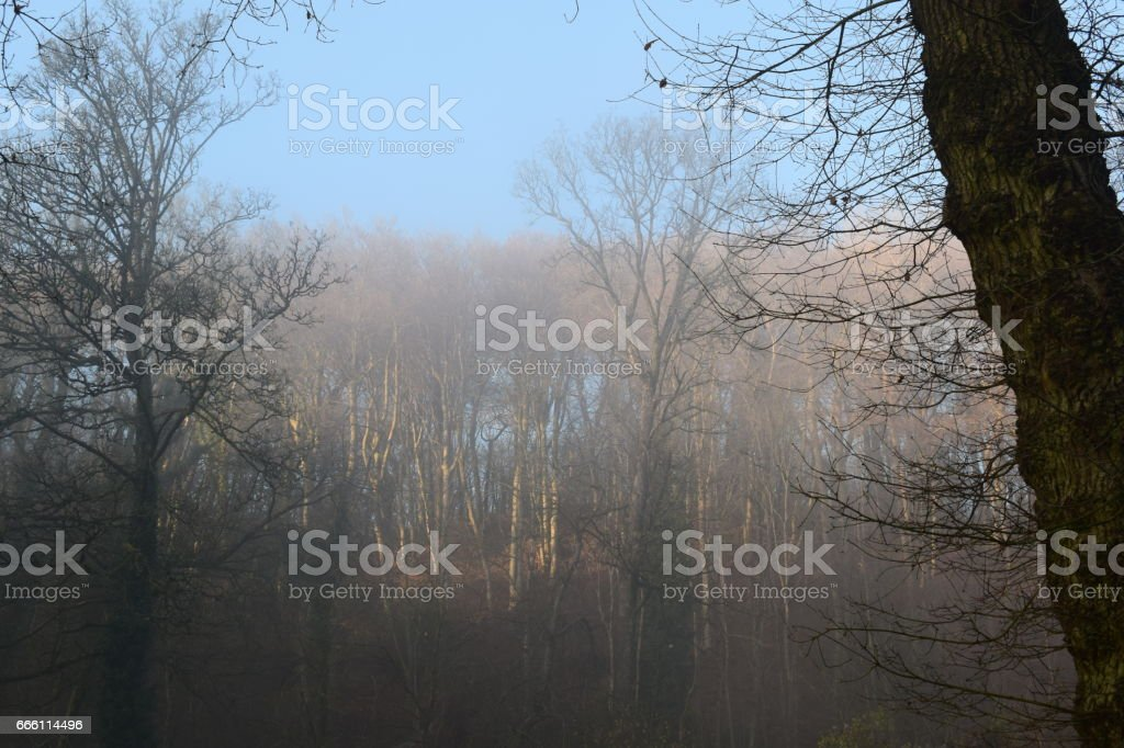 An afternoons fog. stock photo