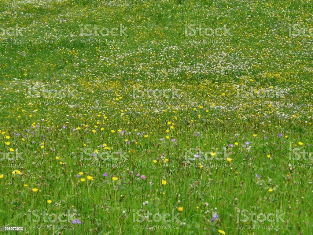 An Alpine Meadow stock photo