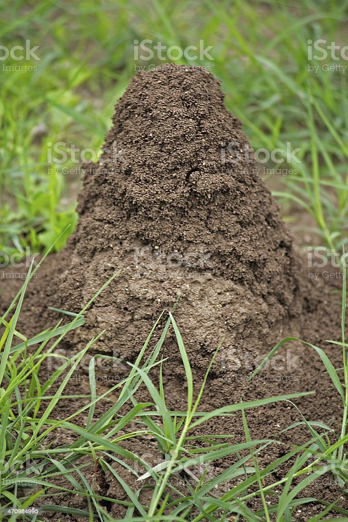 An anthill in the soil stock photo