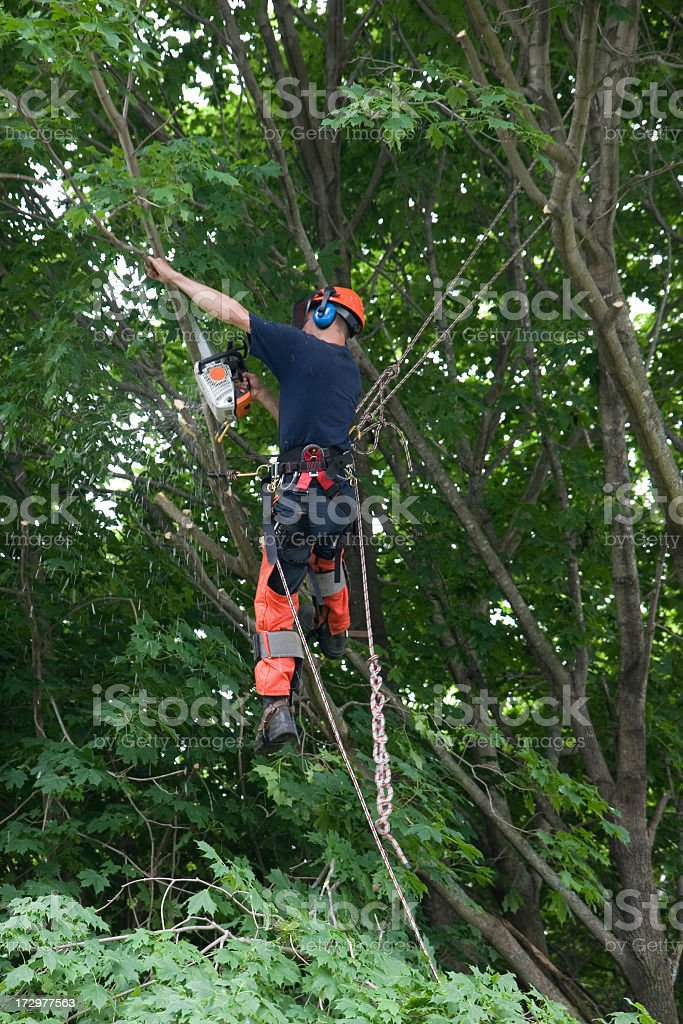 An arborist in full gear, strapped in and sawing a branch stock photo