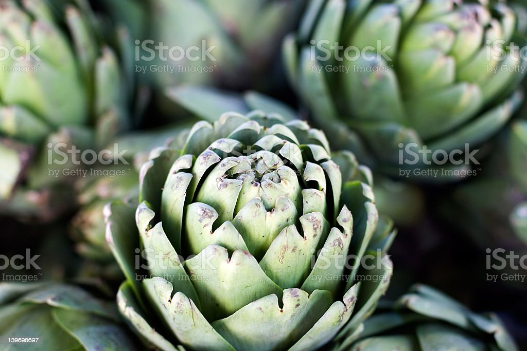 An artichoke growing next to others royalty-free stock photo