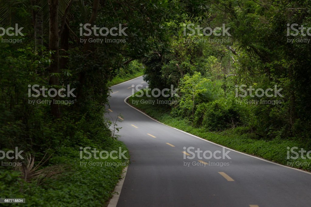 An asphalted winding road in a dense tropical forest with gleams through the trees through which sunlight penetrates stock photo