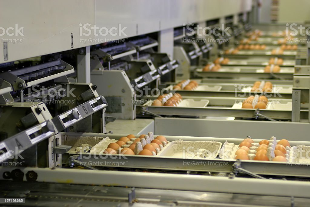 An egg factory processing eggs in a tray stock photo