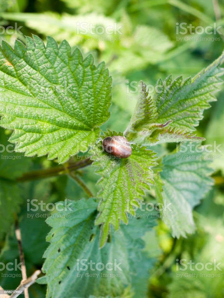 An Empty Shell upon the Top of Some Plant Leaves stock photo