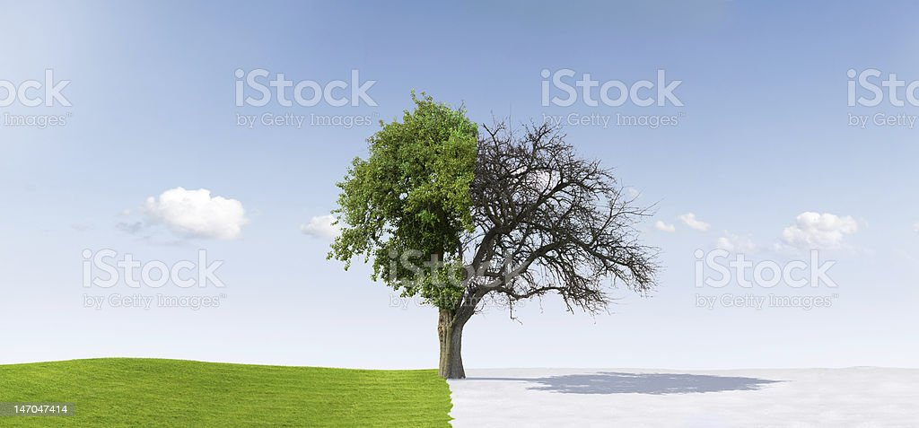 An illustration of a tree in a middle of two season stock photo