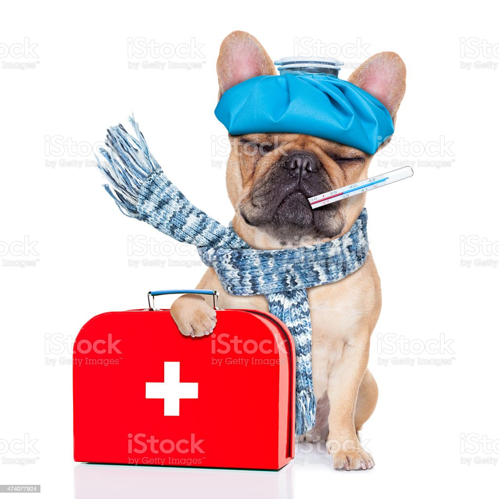 An illustration to convey as sick as a dog stock photo