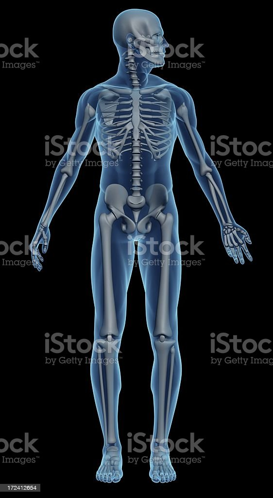 An image of a male skeleton on a black background stock photo