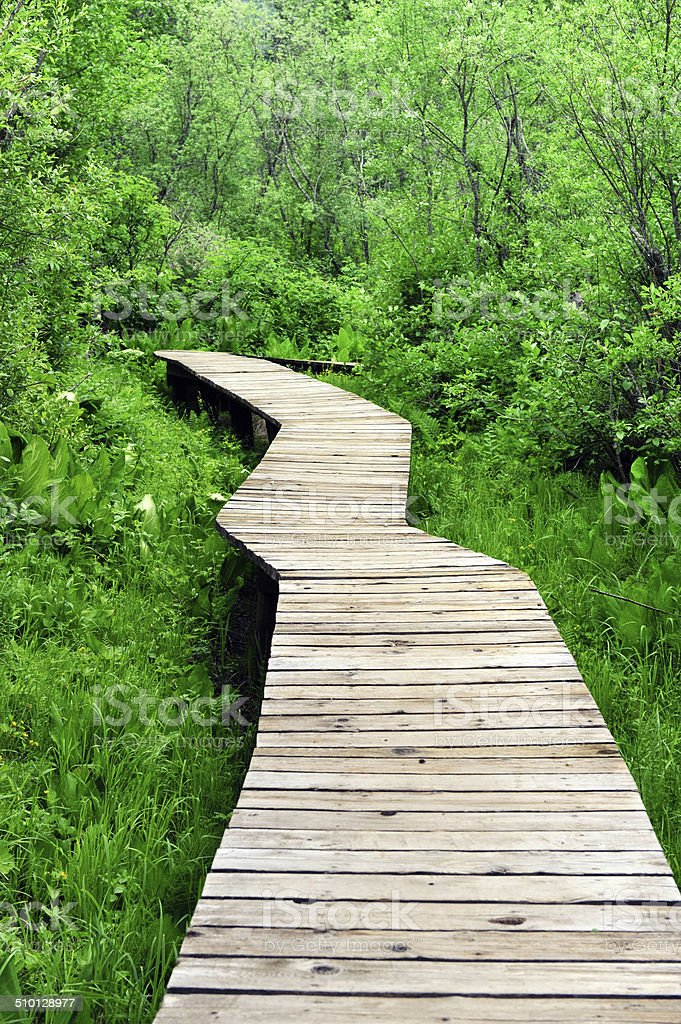 An image of a winding boardwalk around the grass and trees stock photo
