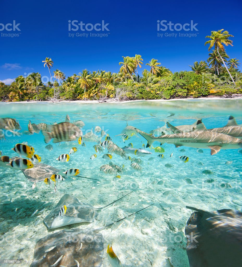 An image of fish in the water by a tropical island stock photo