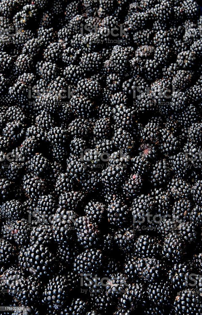 An image of fresh blackberries royalty-free stock photo