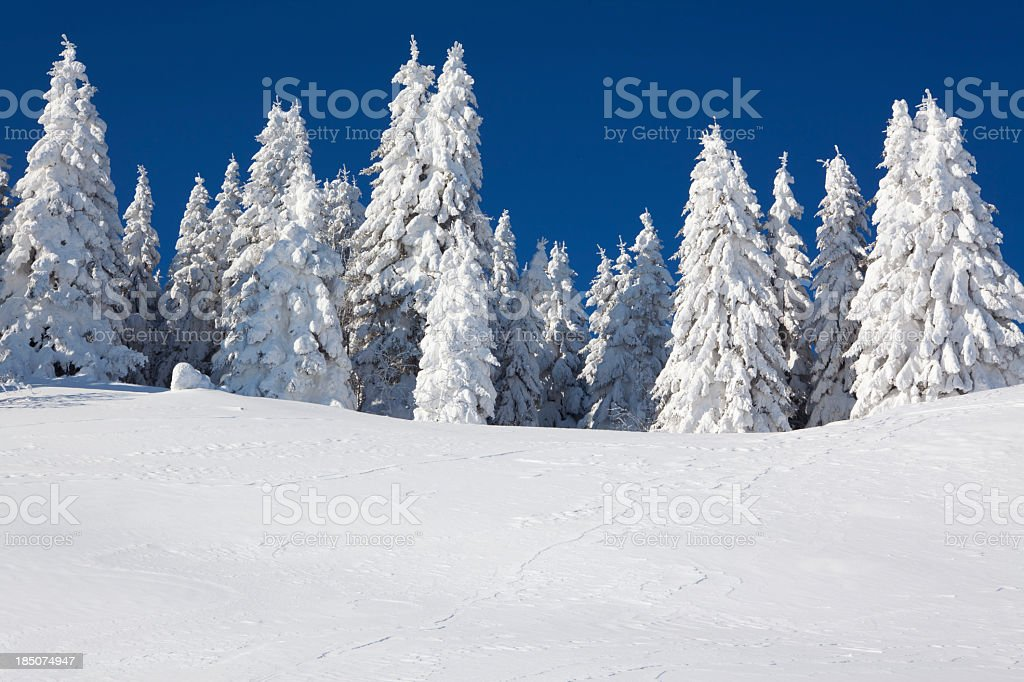An image of fur trees smothered in white snow stock photo