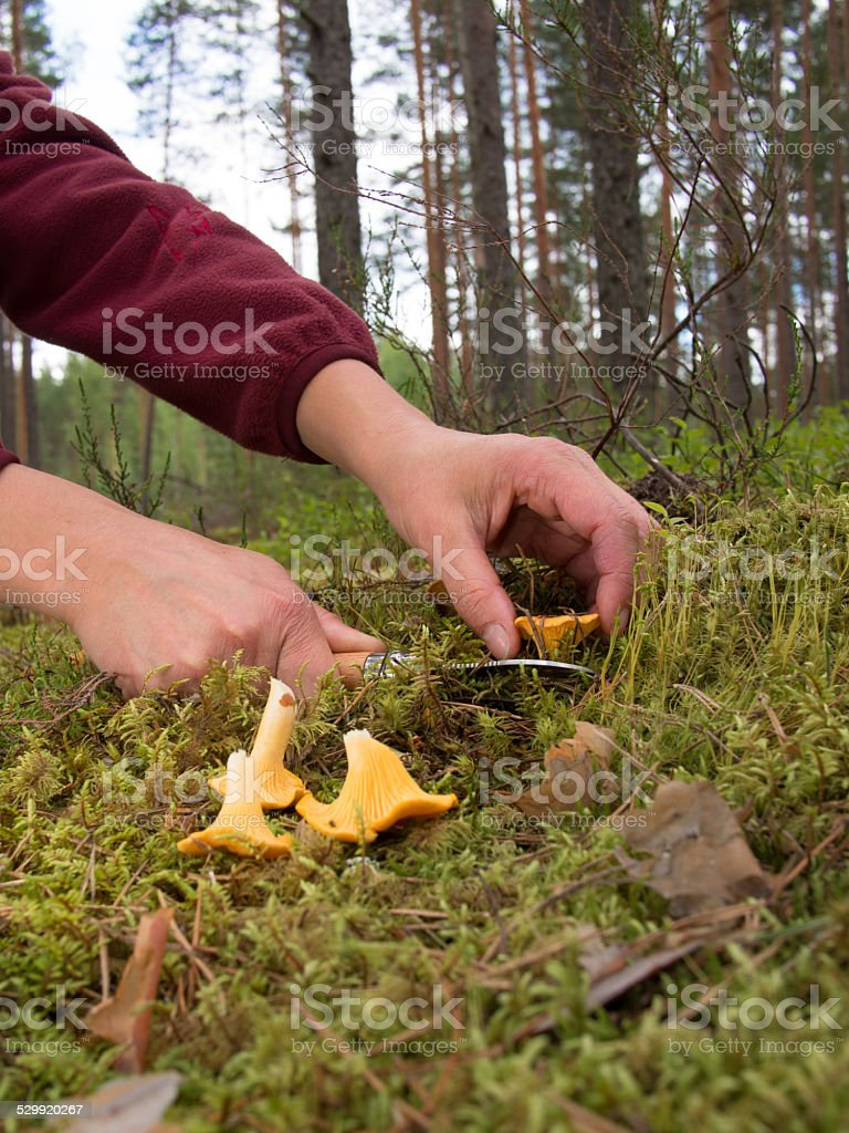 An image of two female hands holding a knife stock photo