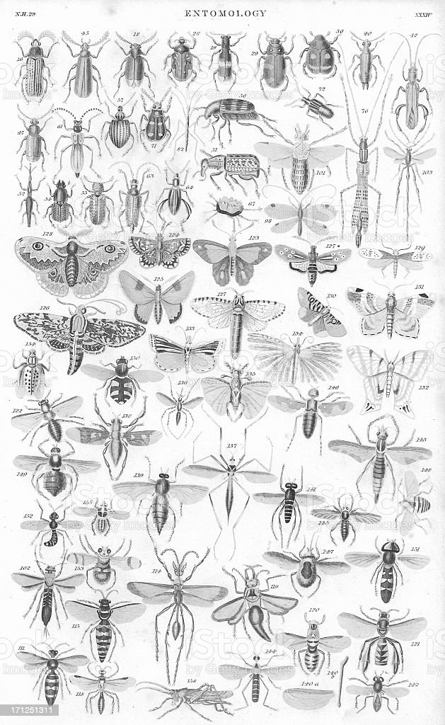 An lithograph print from 1852 of a multitude of insects stock photo