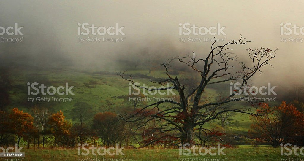 An old dying tree stock photo