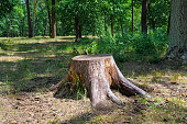 an old stump in the summer park