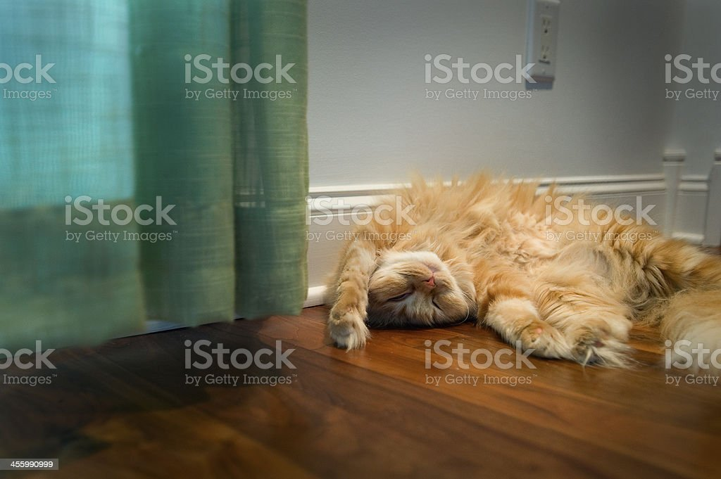 An Orange Cat Sleeping On Her Back stock photo