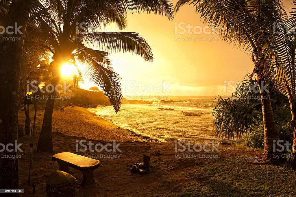 An orange sunset framed by palm trees on the beach stock photo