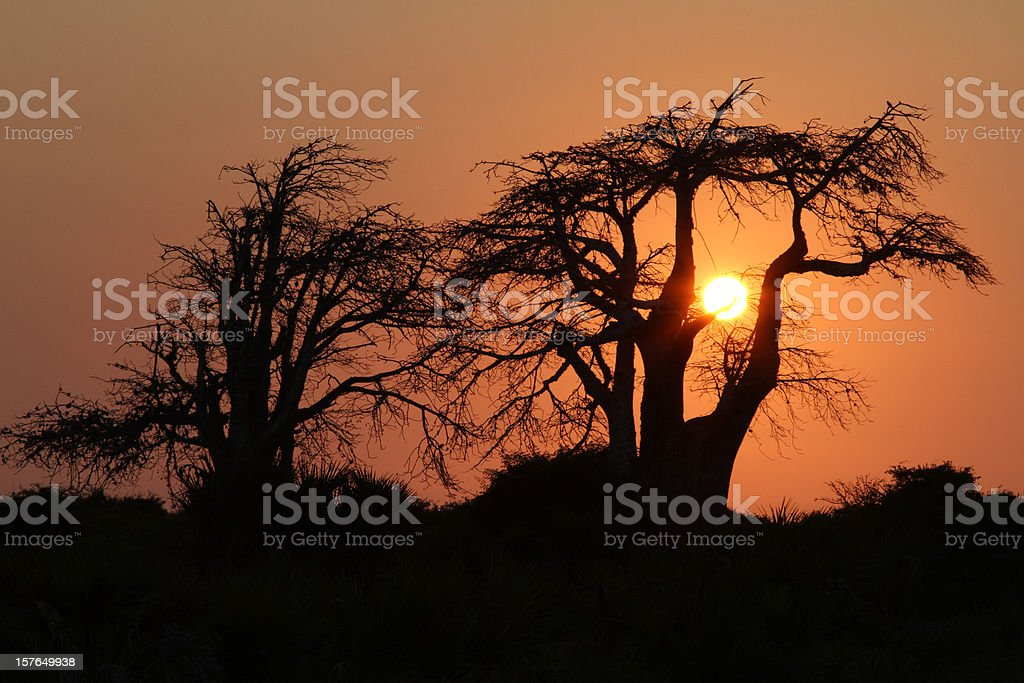 An orange sunset on the African plains  stock photo